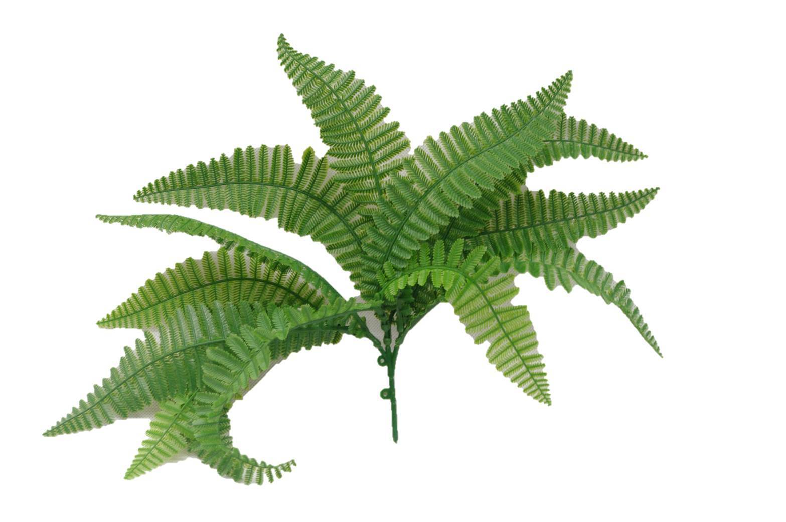 Fern Stem UV